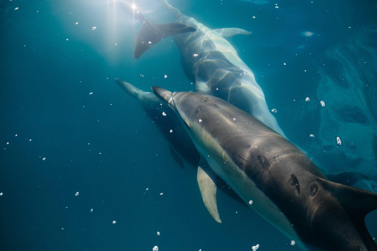 Secret Soul Dolphin trips